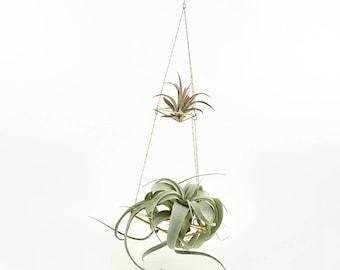 Himmeli Double Chained No02 für Luftpflanzen Pflanzenampel Blumenampel Geometrisch Minimal Dekoration Golden Air Plant