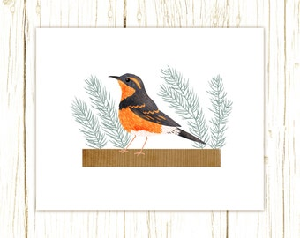 Varied Thrush Print -- bird art -- bird art 52 birds stephanie fizer coleman illustration