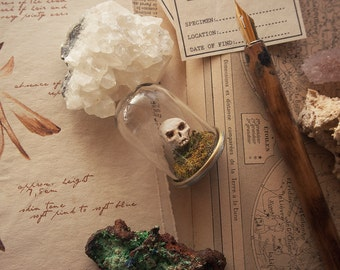 Common Fairy Skull, miniature prop *Nibbley Pickering Collection*