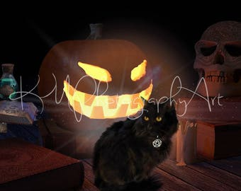 Black Cat print, Jack-o-lantern, Wicken cat, Halloween