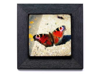 Peacock day - on small frame with photo collage 22x22cm