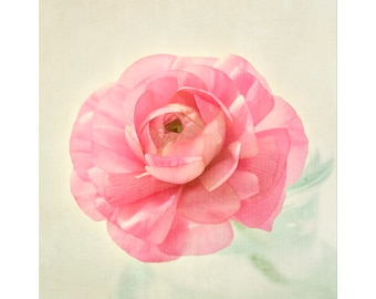 Pink Ranunculus Flower Photography, Pink Floral Wall Art, Country Chic Decor, Flower Print