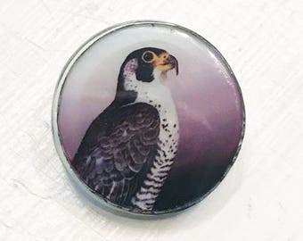 Jim Button Pearl Button Falcon