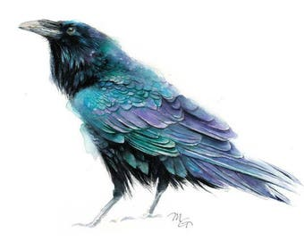 Raven III Art Print - Watercolor Giclee Print. Raven Illustration, Crow, Raven. Black Blue bird