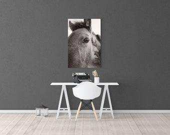 Horse Portrait, Horse Photography, Horse Head, Horse Photo, Black White, Extra Large Wall Art, Photography Print, Huge Canvas Art