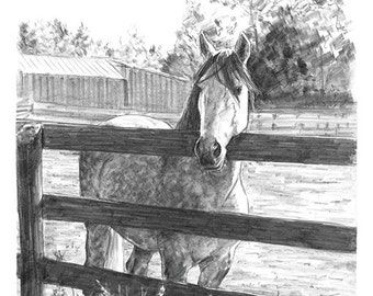 Horse at Fence Ranch Pencil Drawing Sketch Art Artwork Print 8.5 x 11 - Brandy Woods