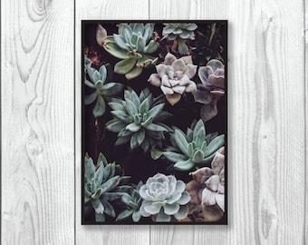 Succulent Plant Print | Plant Print | Botanical | Green | Tropical | Leaf