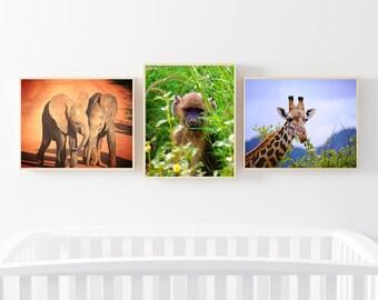 Nursery prints - set of 3 - nursery art - nursery photography - nursery art - safari prints - nursery decor - baby animal prints - baby gift