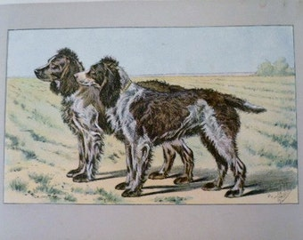 ANTIQUE 1907 FRENCH SPANIEL Audemer signed dog print Chromolithograph Mahler German artist Collectors item Christmas Birthday gift Authentic
