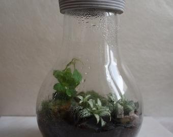 Bulb shaped terrarium