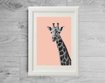 Cute giraffe portrait print black and white photography and pastel - Face giraffe print - Giraffe face print - Nursery decor -Giraffe poster