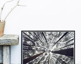 Tree Art Print, Black And White Photo, Minimalist Print, Scandinavian Art, Giclee Art Print, Home Decor, Wall Art, Wall Print
