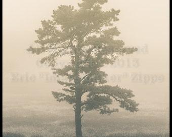 Tree Photography Wall Art, Beige Art, Lone Pine Tree, Big Meadows Shenandoah National Park Virginia, Misty Tree In Fog, Fine Art Photography