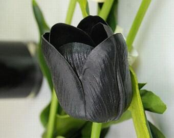 Rare Tulip Bulbs Available Black Tulips Variety Fresh Bulbous Root Flowers 10 Bulbs (Item No: 14)