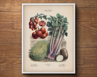 French botanical illustration, Vegetables poster, Botanical print, Vintage vegetable print, Large botanical art, Kitchen wall art decor