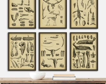 DINOSAUR SKELETONS print SET of 6 Art Prints, Instant Collection Paleontology Wall Decor, Science Poster, Animal Fossils Chart, Skeleton