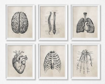 Anatomy Art Prints - Office Art - Medical Student Graduation Gift - Set Of Six - Science - Doctor's Office Decor - Brown Neutral - SKU:892