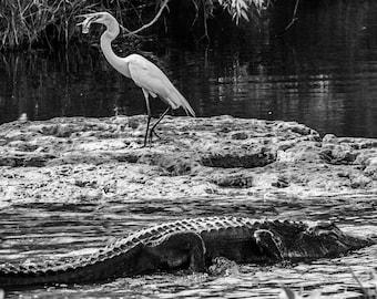 Everglades on Anhinga Trail