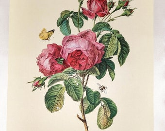"""Silk print, Still life with pink roses, printed in West Germany after G. Van Spaendonck, """"Rose à cent feuilles,"""" Individual or Set"""