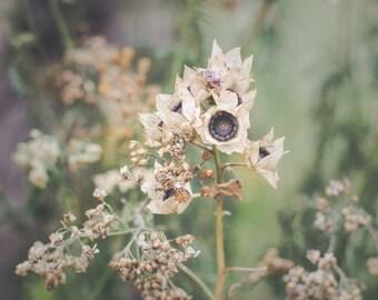 flower photography, autumn art print, floral botanical photo, fine art home dreamy nature wild flowers, green beige decor bedroom whimsical