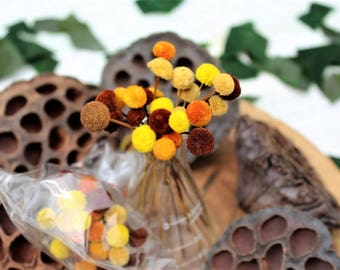 Fall color Button flowers dried-Dried floral-Corsage flowers-Wedding flowers-Autumn colors
