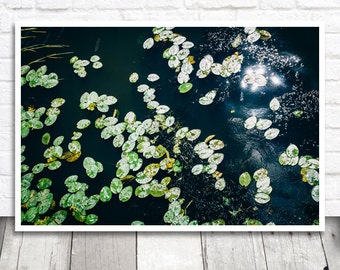 Water Lily Print, Lily Pad Photo, Nature Print, Botanical Print, Lily Pads Print, Printable Wall Art, Instant Download, Printable Photo