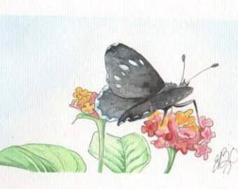 Black Butterfly | 4x6 Original Watercolor