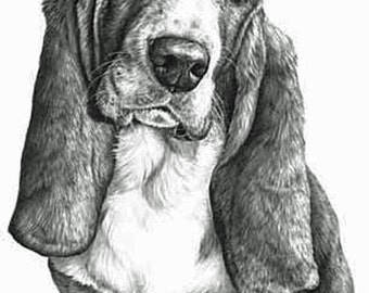 Bassett Hound Fine Art Print by Mike Sibley