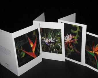 Greeting Card - 4 Pack of  Original Watercolors