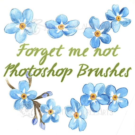 Watercolor Flowers And Paint Brushes: Forget Me Not Blue Flower Watercolor Painting Photoshop Brush