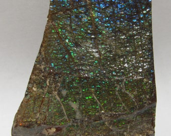 Dragon Skin Ammolite Fragment Multi Color Specimen Blue Green Red Orange Gold Iridescent Play 60gr 300ct Canadian Slice Slab 16T6