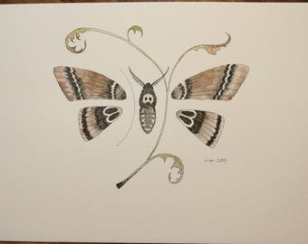 Moth, original artwork aquarelle