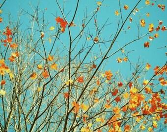 Beautiful Autumn - Gold, Red, Brown,Yellow, Orange  Colorful Autumn - Fall foliage - Turquoise Sky - Nature Autumn Art Photograph