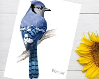 Blue Jay Bird A4 Art Print