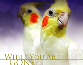 Music Birds Love (CD) While You Are Gone CD (Music for Birds, Cockatoos, Parrots, Parakeets and Bird Music)
