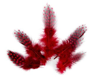10 x 6 to 14cm (69F) Red Guinea fowl feather
