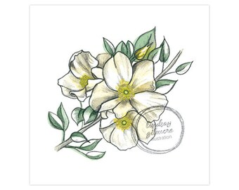 State Flowers: Cherokee Rose (Georgia) print