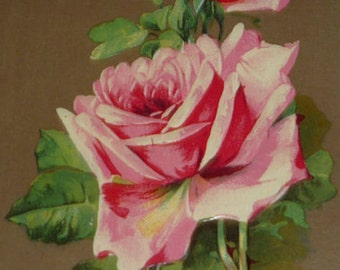 Pink Roses Antique Greeting Postcard