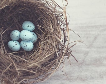robin's nest fine art photography fathers day for her him child nursery spring childhood memories blue eggs