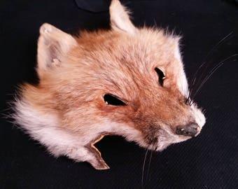Fox Face - ChippersTaxidermy