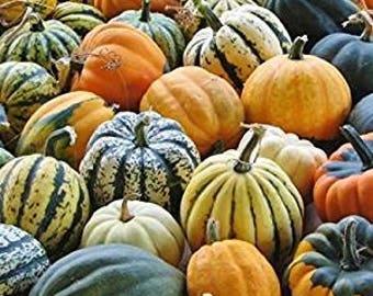 Acorn Autumn Winter Squash Seeds - Davids Garden Seeds - Winter Squash Seeds - Acorn Autumn Squash Seeds - Non GMO Squash Seeds