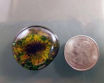 Glass Dragon Eye; Gold