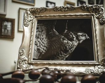 """Wunderkammer III 