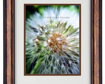 Nature Photography - Hardwood Wall Framed Art from a Secret Paradise