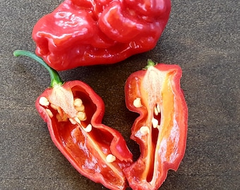FRESH/EDIBLE 5x Fitalii jisaw  peppers: Gourmet Super Hot. Produces a super numbing effect - not as searing hot as the C. REAPERS.