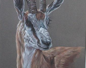 Gazelle - Original Artwork
