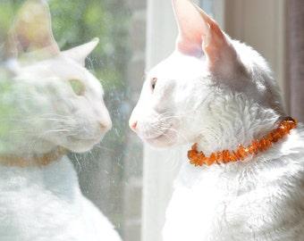 Anti fleas - anti tik cat colar made of baltic amber Flexible cat necklace Baltic Amber necklace for pets