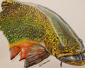 SMALL 8.5x10 Colored Pencil Brook Trout Print