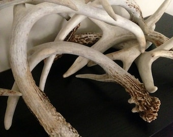Reclaimed Deer Antler Art