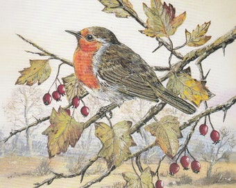 Robin on hawthorn
